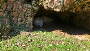 Mağarada 300 kilo esrar ele geçirildi