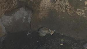 Kuyuya düşen 2 tilki kurtarıldı