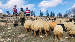 Çaldığı 132 koyunu 105 bin liraya satmış