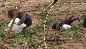 Suriyeli minik mültecinin görüntüleri Düşe kalka taşıdı…