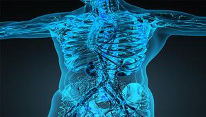 Dolaşım sistemi nedir Dolaşım sistemi organları ve hastalıkları nelerdir