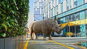'Rhinos Back in Town' Masterpiece'te