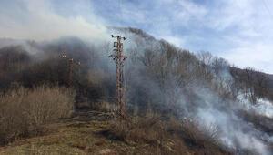 Ordu'daki orman yangını kontrol altına alındı