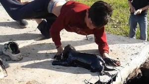 Çocukların petrol atığı kuyusundan kurtardıkları köpeği sahiplendiler