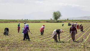 Tarımda Ar-Geye 400 milyon lira kaynak ayrılıyor
