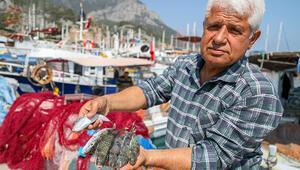 Antalyada balon balığıyla mücadelede, Kuyruğunu getir 5 lira al projesi balıkçıları sevindirdi