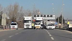 Köpeği yolu karşısına geçirmek için trafiği durdurdular
