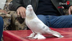 Güvercini için yapılan 55 bin dolarlık teklifi reddetmiş