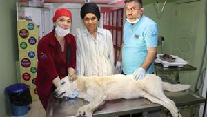 Köpeğin vücudundaki 2 kiloluk tümör alındı