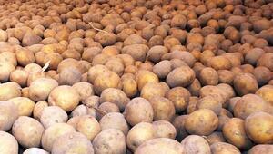 Patates ve soğan stoku yeterli