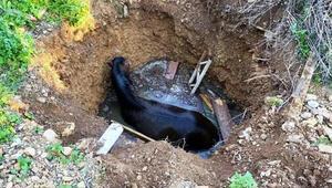 Su dolu kuyuya düşen atı itfaiye ekipleri kurtardı