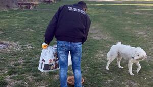 Kırklarelide sokak hayvanlarına mama bırakıldı