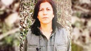 PKK'nın tercümanı öldürüldü