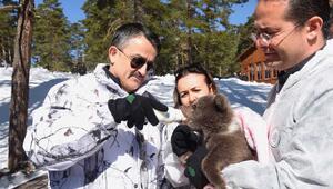 Bakan Pakdemirli, yavru ayıyı biberonla besledi