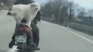 Motosiklette arkasındaki köpekle yol aldı