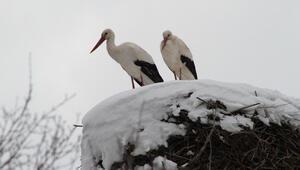 Leyleklere ilkbaharda kar sürprizi
