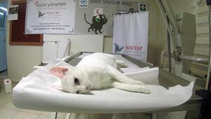 3üncü kattan düşünce bacağı kırılan kedi ameliyatla sağlığına kavuştu