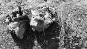 Bitliste köy yoluna tuzaklanmış 60 kilo EYP bulundu