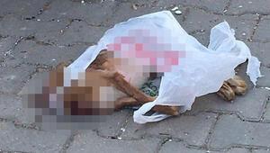 Poşette kafası kesilmiş köpek ölüsü bulundu