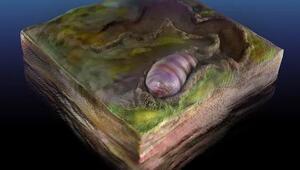 Kurtçuğa benzer 555 milyon yıllık bir canlının fosili bulundu