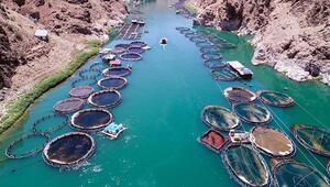 Alabalık ihracatı yılın ilk iki ayında yüzde 41 arttı