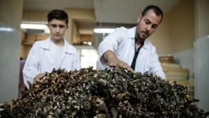 Kilosu 120 lira Corona virüs talebi yağıyor