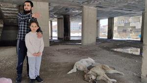 İnşaatın 5inci kadında mahsur kalan köpekler kurtarıldı