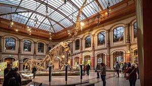 Berlinin muhteşem doğa tarihi müzesi