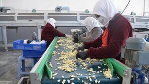 Koronavirüs sarımsağın fiyatını arttırdı