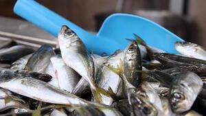 Rusyaya 17 milyon dolarlık balık ihraç edildi
