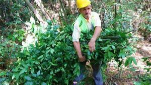 Ülke ekonomisine kazandırılması amacıyla 210 farklı orman ürünü