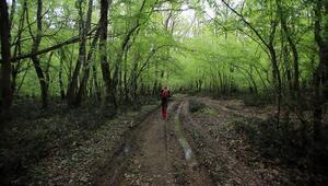 Trakyada bir cennet: İğneada Longoz Ormanları