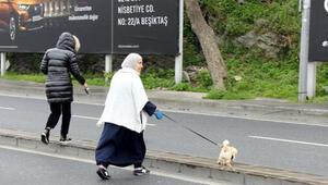 Bebek Sahili'nde yasağa uymadılar, yürüyüş yapıp köpek gezdirdiler