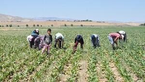 Tarım işçilerine korona virüs tedbiri