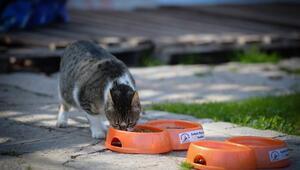 Muratpaşadan sokak hayvanlarına mama desteği