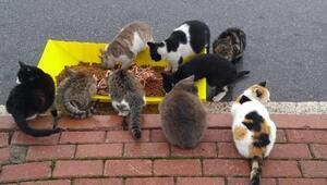Kocasinan Belediyesinden sokak hayvanlarına mama
