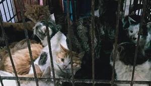 Virüs orada ortaya çıkmıştı Çin'de hayvan pazarları yeniden açıldı