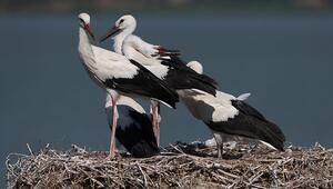 Bursanın Leylek Köyü kuş cenneti olacak