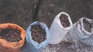 Afyonkarahisarda izinsiz salyangoz toplayan 4 kişiye 2şer bin lira ceza kesildi