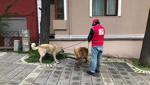 Sokağa çıkamayan yaşlıların evcil hayvanlarını gezdirdiler