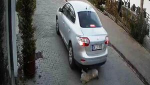 Köpeğe çarparak ölümüne neden olan sürücü kamerada