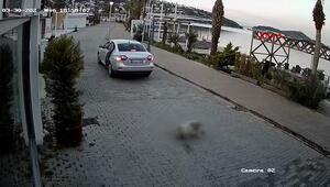 Köpeğe çarpıp kaçan sürücü güvenlik kamerasında