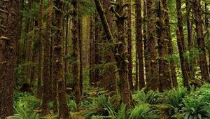 Antarktikada 90 milyon yıl önce yağmur ormanı olduğuna dair kanıt bulundu
