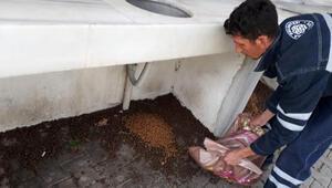 Biga Belediyesi sokak hayvanlarını yalnız bırakmadı