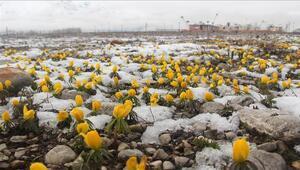 Baharda yağan kar Ovacıkın doğasına güzellik kattı