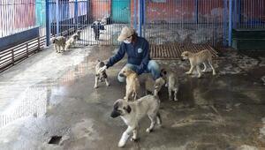 Büyükşehir Belediyesi, sokak hayvanları için mama bıraktı