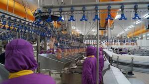 Has Tavuk çalışan sayısını arttırdı