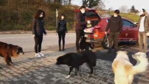 Beykozda aç kalan sokak köpeklerini beslediler
