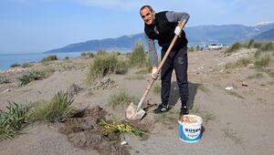 Antalyada sınıf öğretmeni koruma altındaki kum zambaklarının fidesini yetiştirip, toprakla buluşturuyor