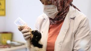 Şefkat yuvasında, 2 bin 500 sokak hayvanı sahiplendirildi